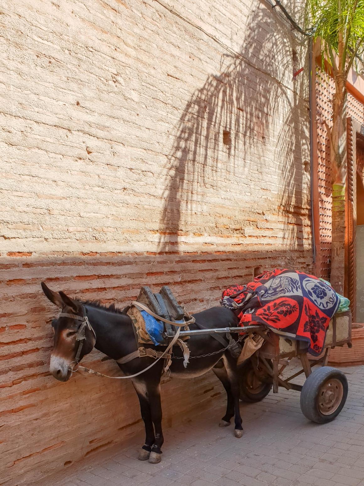 Ezeltje medina Marrakesh