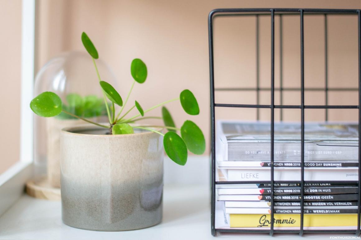 Pilea pannenkoekplant niet giftig